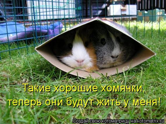 Котоматрица: Такие хорошие хомячки,  теперь они будут жить у меня!