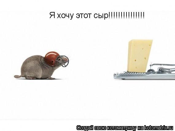 Котоматрица: Я хочу этот сыр!!!!!!!!!!!!!!!
