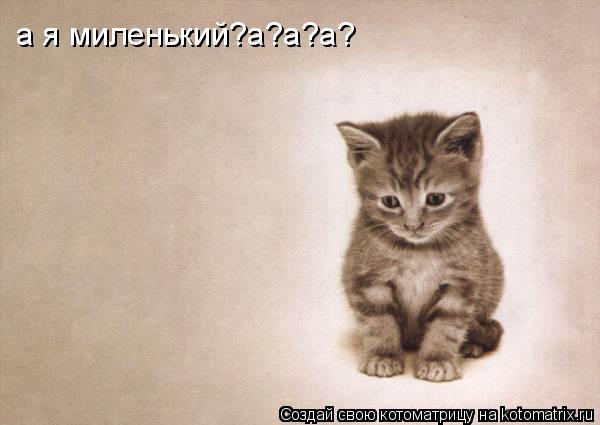 Котоматрица: а я миленький?а?а?а?