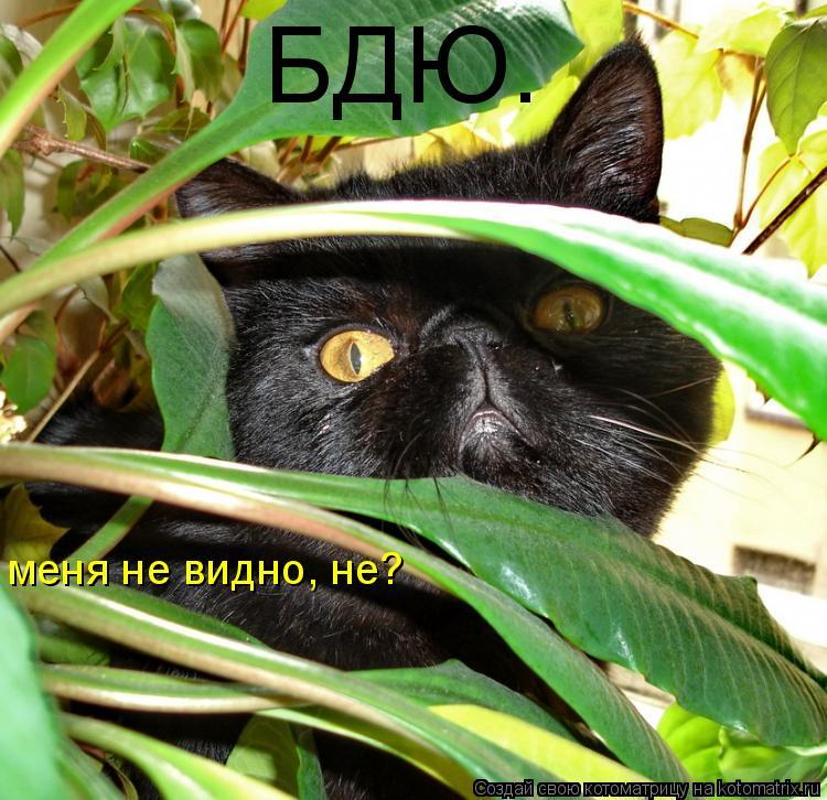 Котоматрица: БДЮ. меня не видно, не?
