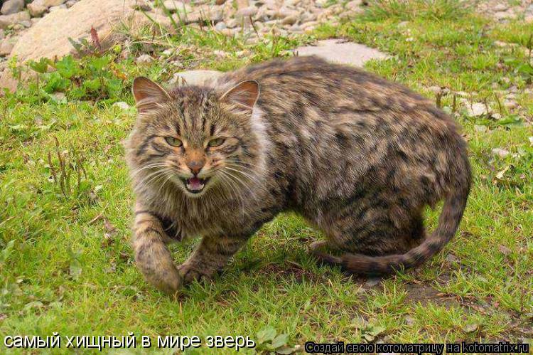 Котоматрица: самый хищный в мире зверь