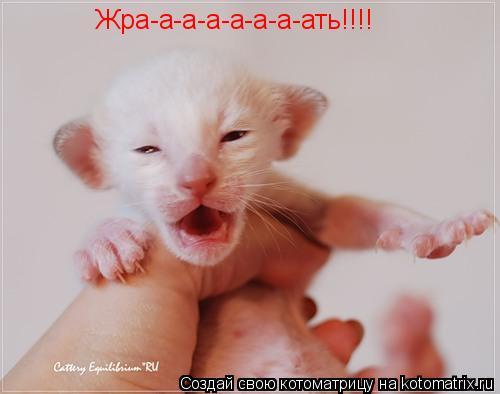 Котоматрица: Жра-а-а-а-а-а-а-ать!!!!