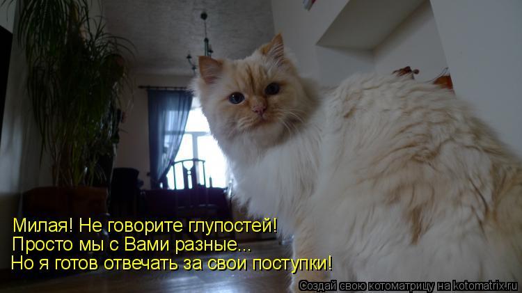 Котоматрица: Милая! Не говорите глупостей! Просто мы с Вами разные... Но я готов отвечать за свои поступки!