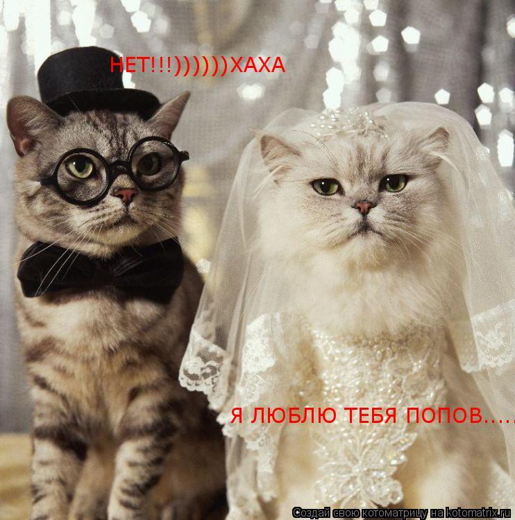 Котоматрица: Я ЛЮБЛЮ ТЕБЯ ПОПОВ..... НЕТ!!!))))))ХАХА