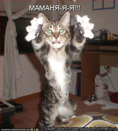 Котоматрица: МАМАНЯ-Я-Я!!!