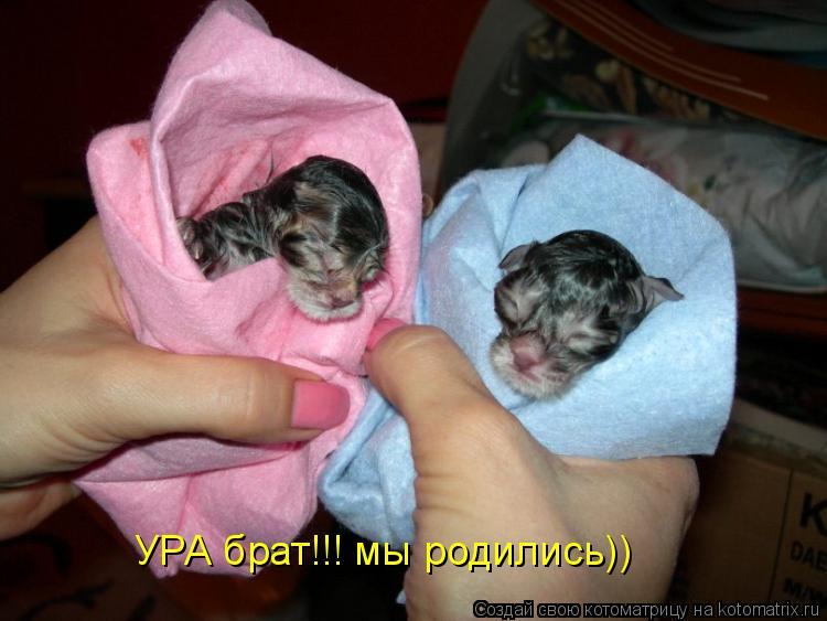 Котоматрица: УРА брат!!! мы родились))