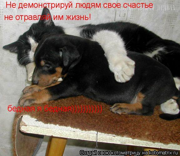 Котоматрица: Не демонстрируй людям свое счастье  не отравляй им жизнь! бедная я бедная)))))))))))