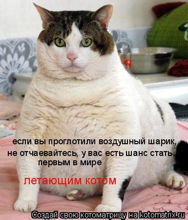 Котоматрица: если вы проглотили воздушный шарик, не отчаевайтесь, у вас есть шанс стать... первым в мире летающим котом