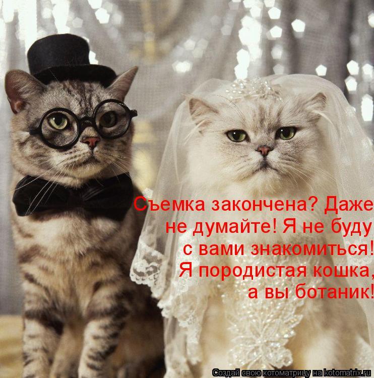 Котоматрица: Съемка закончена? Даже  не думайте! Я не буду  с вами знакомиться!  Я породистая кошка, а вы ботаник!