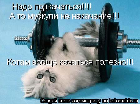 Котоматрица: Надо подкачаться!!!! А то мускули не накачание!!! Котам вобще качаться полезно!!!