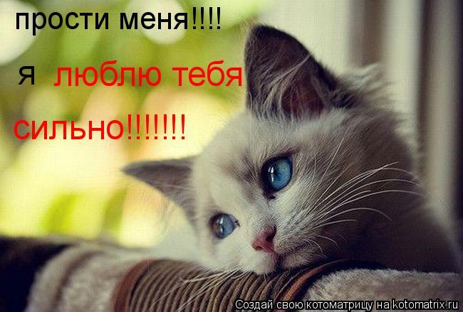 Котоматрица: прости меня!!!! я  люблю тебя сильно!!!!!!!