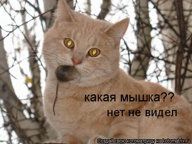 Котоматрица: какая мышка?? нет не видел