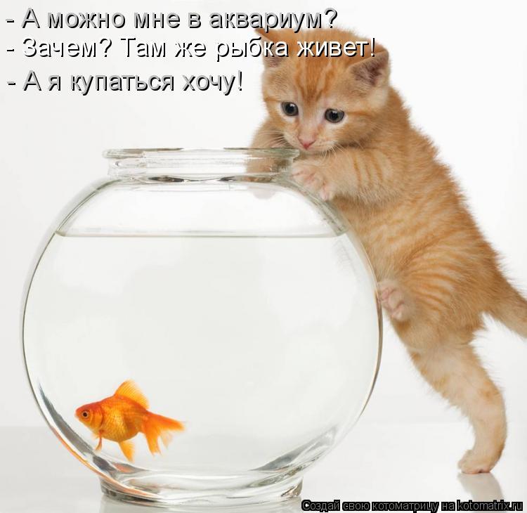 Котоматрица: - А можно мне в аквариум? - Зачем? Там же рыбка живет! - А я купаться хочу!