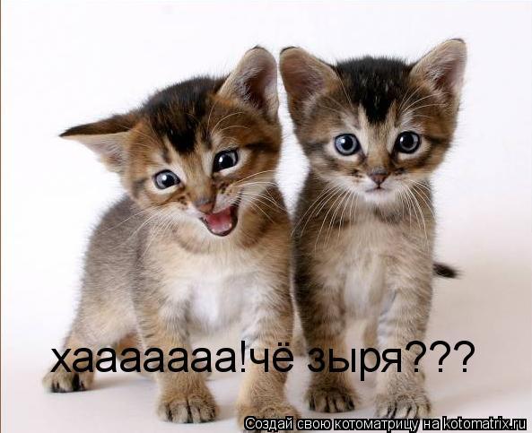 Котоматрица: хааааааа!чё зыря???