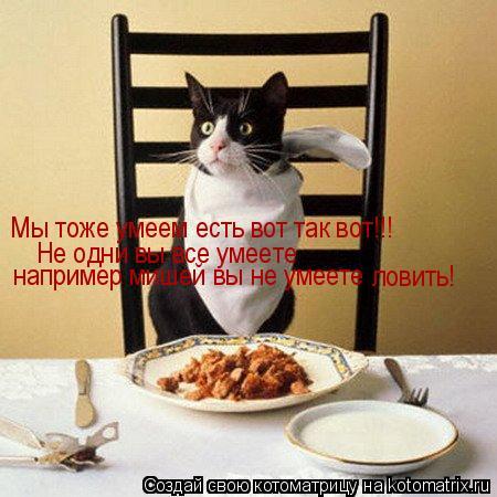 Котоматрица: Мы тоже умеем есть вот так вот!!! Не одни вы все умеете например мишей вы не умеете ловить!