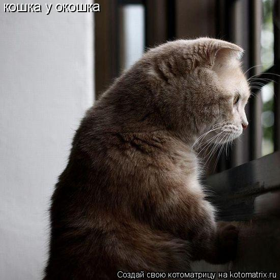 Котоматрица: кошка у окошка