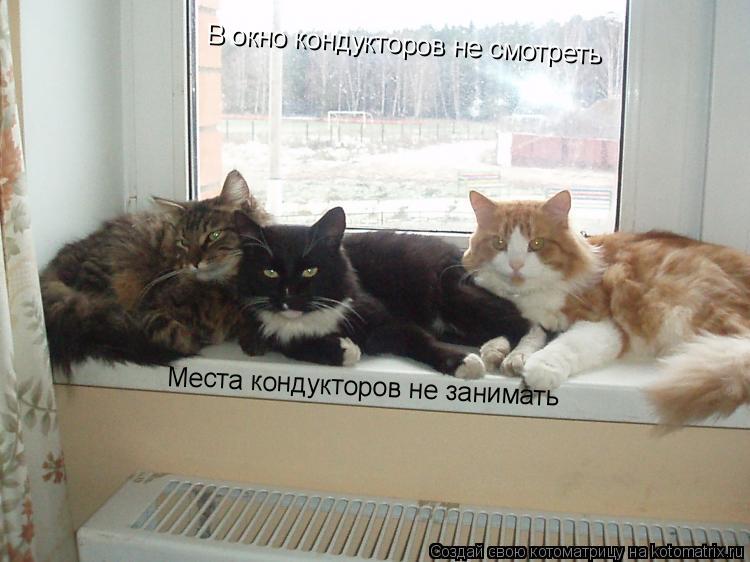 Котоматрица: Места кондукторов не занимать В окно кондукторов не смотреть