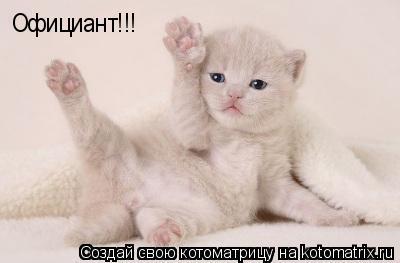 Котоматрица: Официант!!!