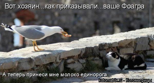 Котоматрица: Вот хозяин...как приказывали...ваше Фоагра А теперь принеси мне молоко единорога...