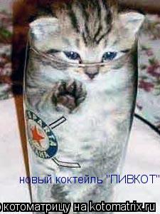 """Котоматрица: новый коктейль """"ПИВКОТ"""""""