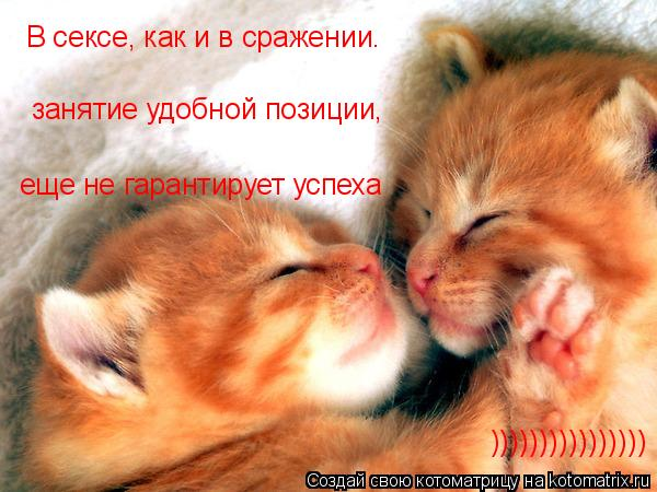 Котоматрица: В сексе, как и в сражении. занятие удобной позиции,  еще не гарантирует успеха ))))))))))))))))