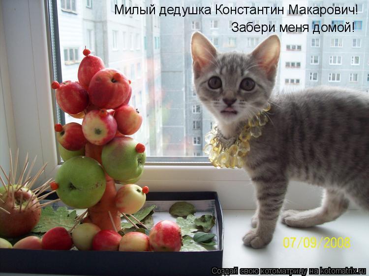 Котоматрица: Милый дедушка Константин Макарович!  Забери меня домой!
