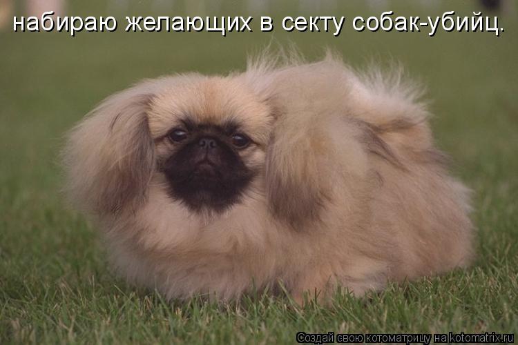 Котоматрица: набираю желающих в секту собак-убийц.