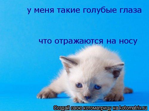 Котоматрица: у меня такие голубые глаза что отражаются на носу