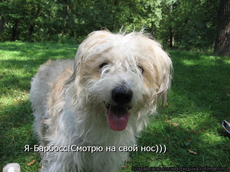 Котоматрица: Я-Барбосс!Смотрю на свой нос)))