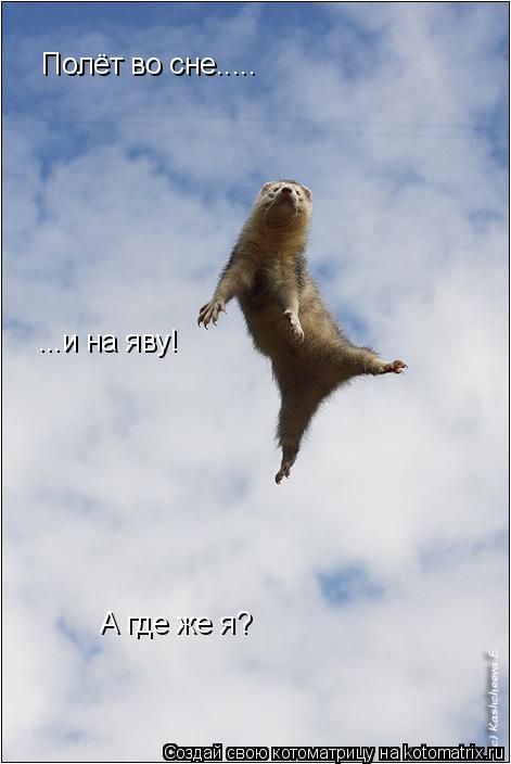Котоматрица: Полёт во сне..... А где же я? ...и на яву!