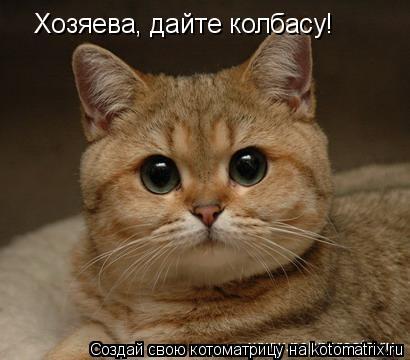 Котоматрица: Хозяева, дайте колбасу!