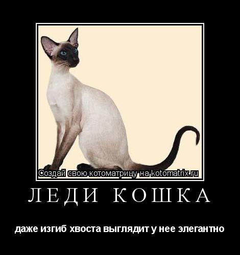 Котоматрица: Леди Кошка даже изгиб хвоста выглядит у нее элегантно