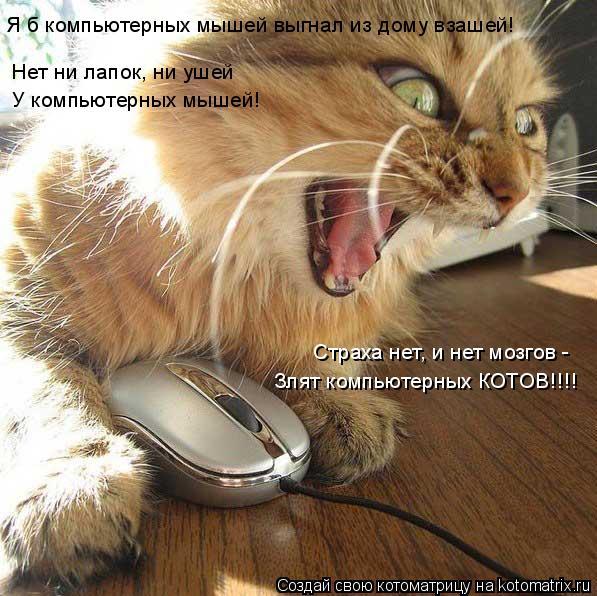 Котоматрица: Нет ни лапок, ни ушей У компьютерных мышей! Страха нет, и нет мозгов - Я б компьютерных мышей выгнал из дому взашей! Злят компьютерных КОТОВ!!!!