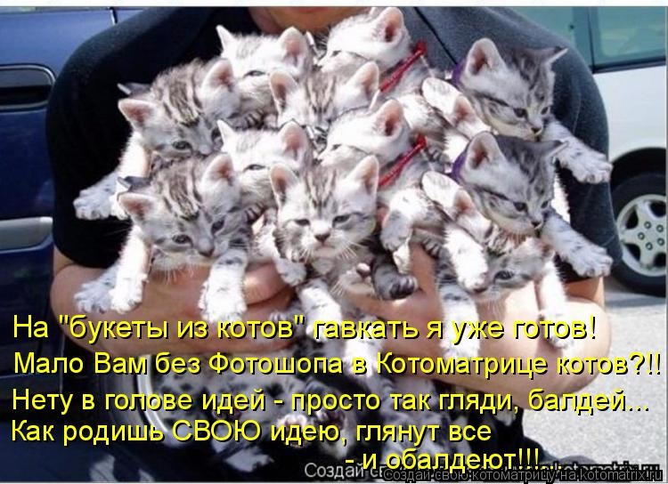 """Котоматрица: На """"букеты из котов"""" гавкать я уже готов! Мало Вам без Фотошопа в Котоматрице котов?!! Нету в голове идей - просто так гляди, балдей... Как родиш"""