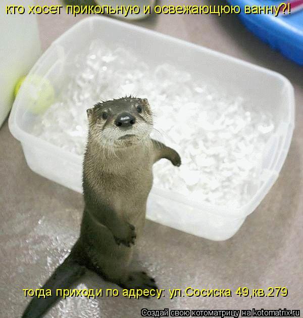 Котоматрица: кто хосет прикольную и освежающюю ванну?! тогда приходи по адресу: ул.Сосиска 49,кв.279