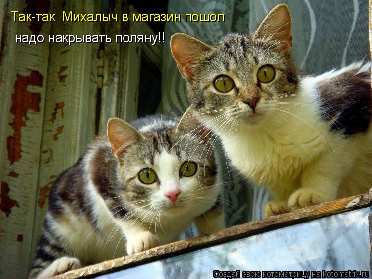 Котоматрица: Так-так  Михалыч в магазин пошол надо накрывать поляну!!