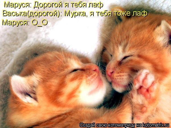 Котоматрица: Маруся: Дорогой я тебя лаф Васька(дорогой): Мурка, я тебя тоже лаф Маруся: О_О