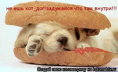 Котоматрица: не ешь хот_дог!задумайся что там внутри!!!