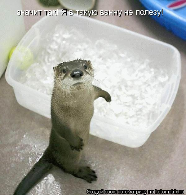 Котоматрица: значит так! Я в такую ванну не полезу!