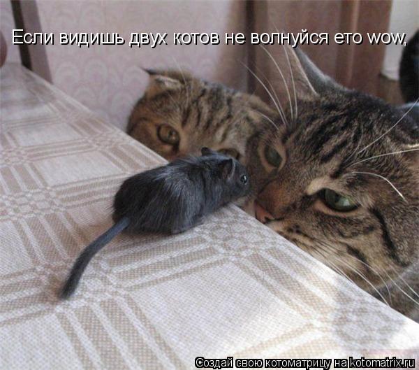 Котоматрица: Если видишь двух котов не волнуйся ето wow,