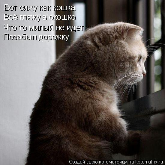 Котоматрица: Вот сижу как кошка Всё гляжу в окошко Что то милый не идет Позабыл дорожку