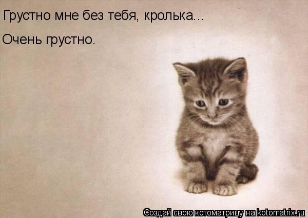 Котоматрица: Грустно мне без тебя, кролька... Очень грустно.