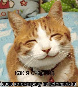Котоматрица: как я счаслив