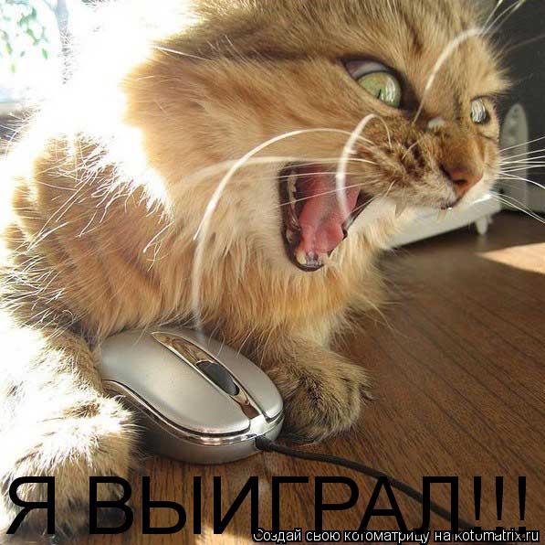 Котоматрица: Я ВЫИГРАЛ!!!