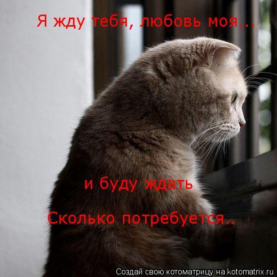 Котоматрица: Я жду тебя, любовь моя...  и буду ждать Сколько потребуется..