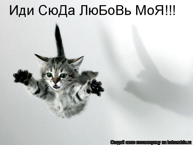 Котоматрица: Иди СюДа ЛюБоВь МоЯ!!!