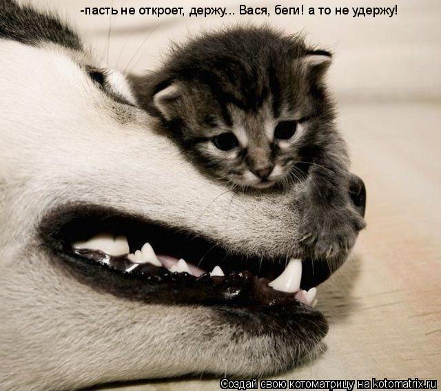 Котоматрица: -пасть не откроет, держу... Вася, беги! а то не удержу!