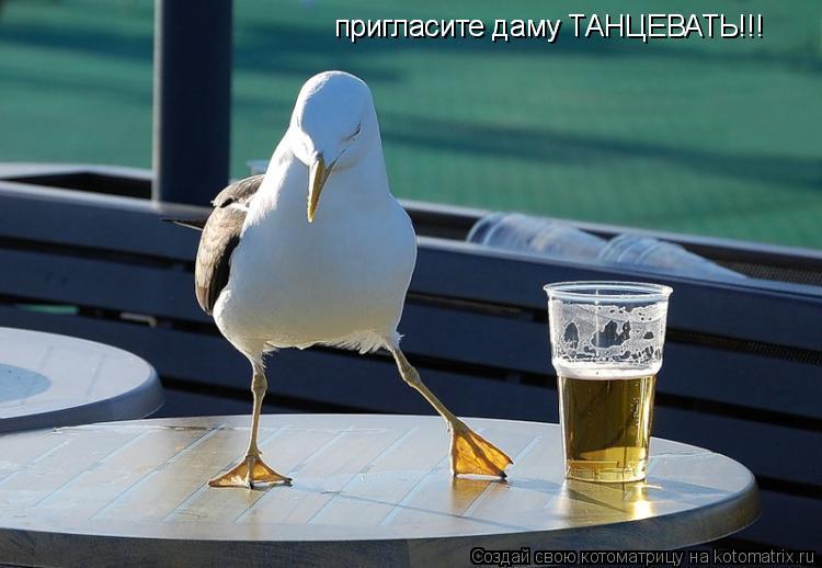 Котоматрица: пригласите даму ТАНЦЕВАТЬ!!! пригласите даму ТАНЦЕВАТЬ!!!