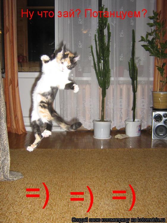 Котоматрица: Ну что зай? Потанцуем? =) =) =)