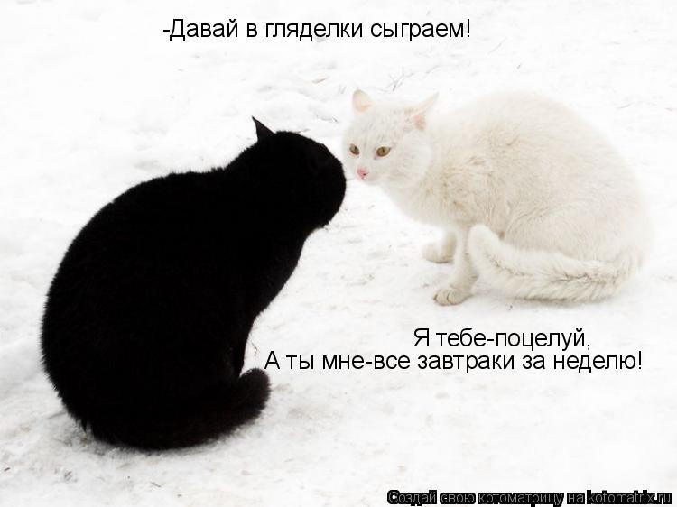 Котоматрица: -Давай в гляделки сыграем! Я тебе-поцелуй, А ты мне-все завтраки за неделю!